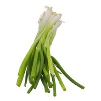 Onions Green Scallions Organic