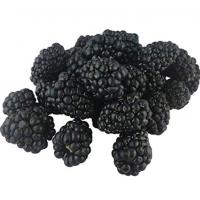 Blackberry Orgnaic