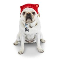 Reddy Red Knit Dog Beanie, X-Small/Small