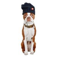 Reddy Black Knit Dog Beanie, X-Small/Small