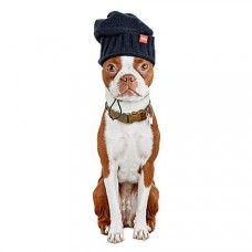 Reddy Black Knit Dog Beanie, X-Small/Small