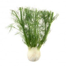 Fennel (Anise)