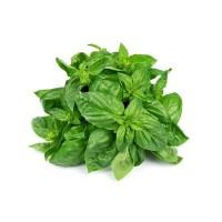 Basil Organic Fresh