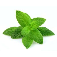 Mint Organic Fresh